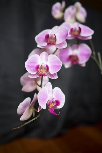 orchidunedited