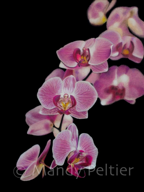 orchidblossomswatermark (1 of 1)