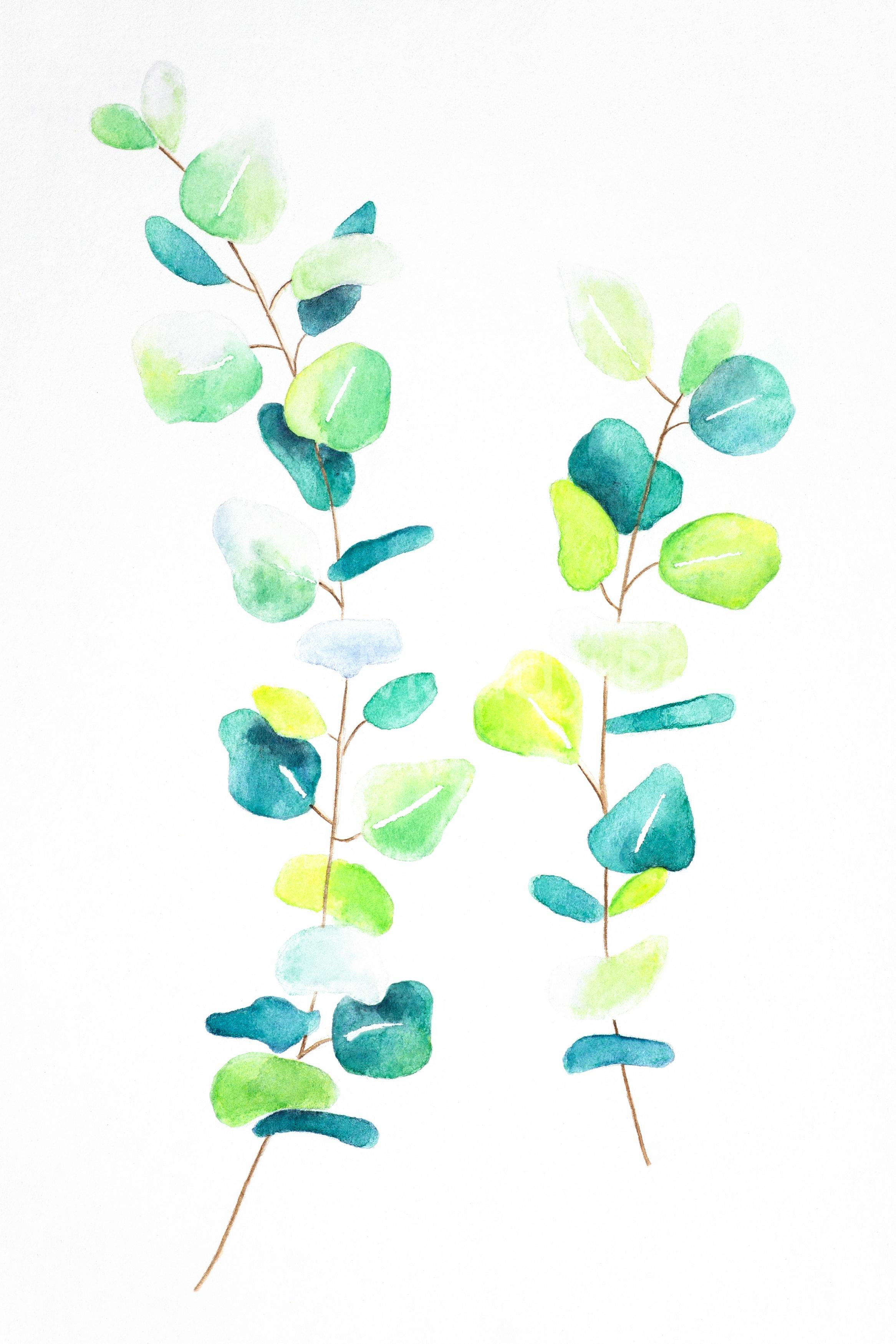 eucalyptuswatermark-3
